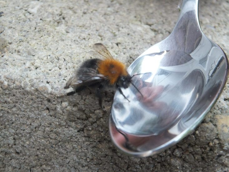 What Growers Can Do About Dying Bees