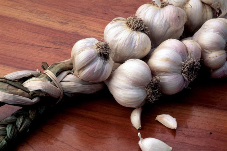 Sweet Smell of Garlic Success