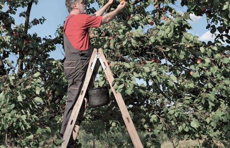 Climbing Up the Orchard