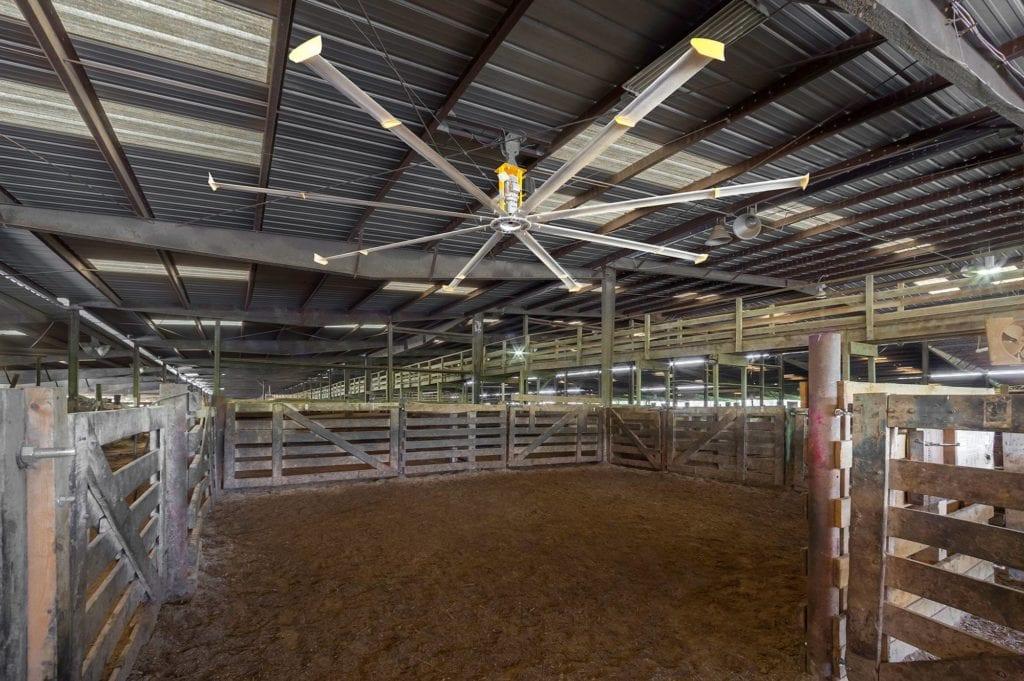 Energy Efficiency of Livestock Buildings