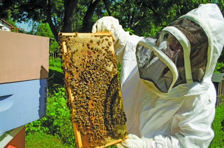 Bee Safe Pesticides