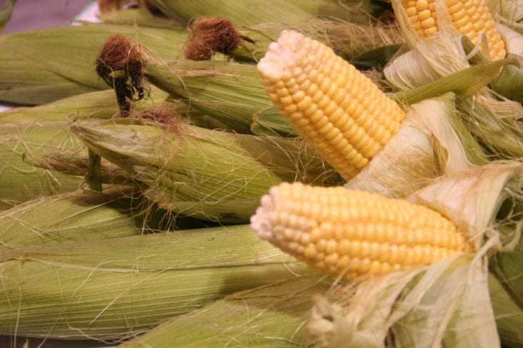 What Are the Best and Easiest to Grow Corn Varieties?