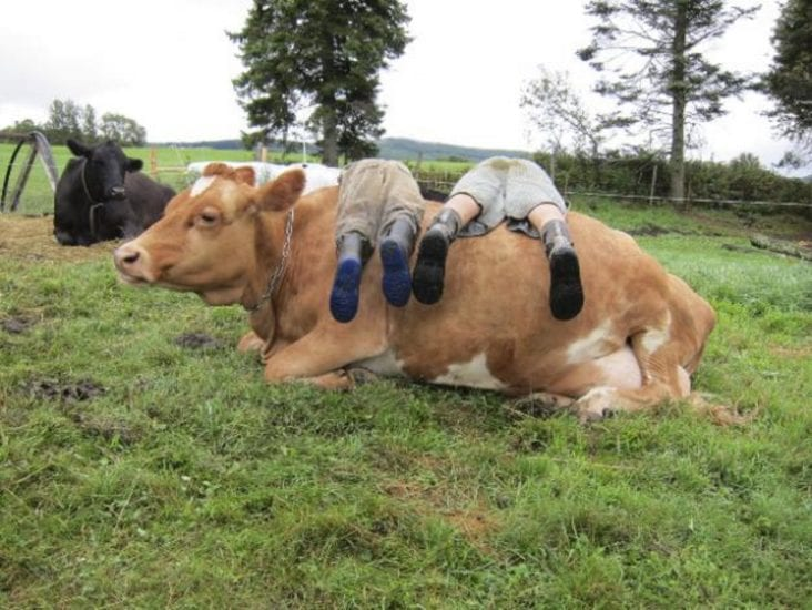 How Can Life On Farm Benefit Your Health