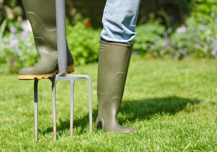 What Are The Pros And Cons Of Hiring A Professional To Take Care Of Your Lawn