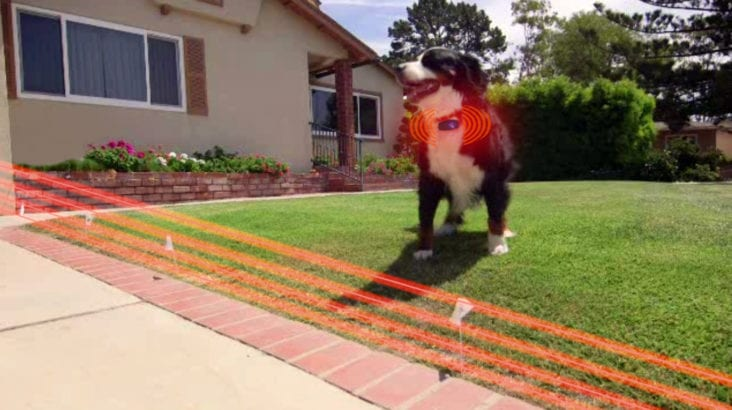 Why You Should Use a Wireless Dog Fence