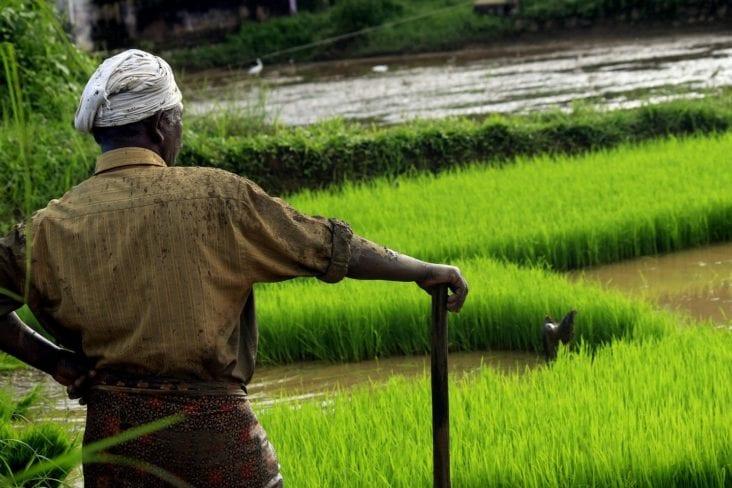 organic farming in India 3