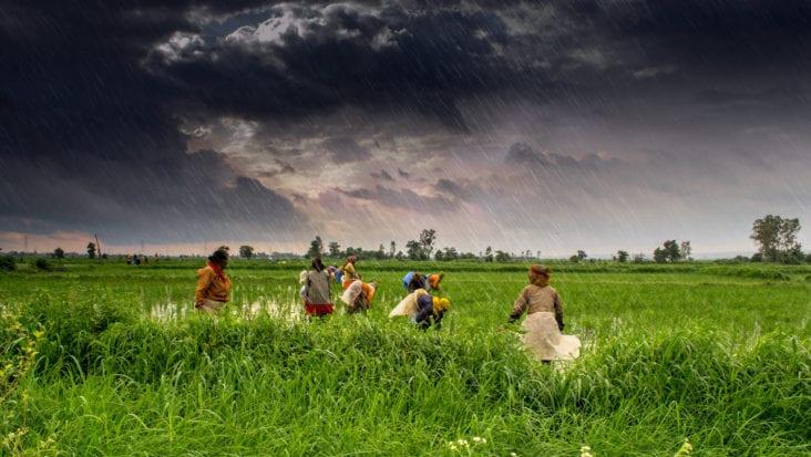 organic farming in India 4