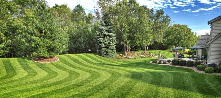 Make Your Lawn Beautiful Again