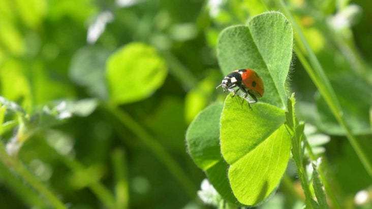 Flowers as Pest and Disease Control