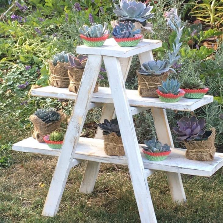 Ladder Plants